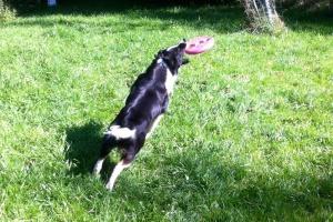 Ferienhund Frisbee