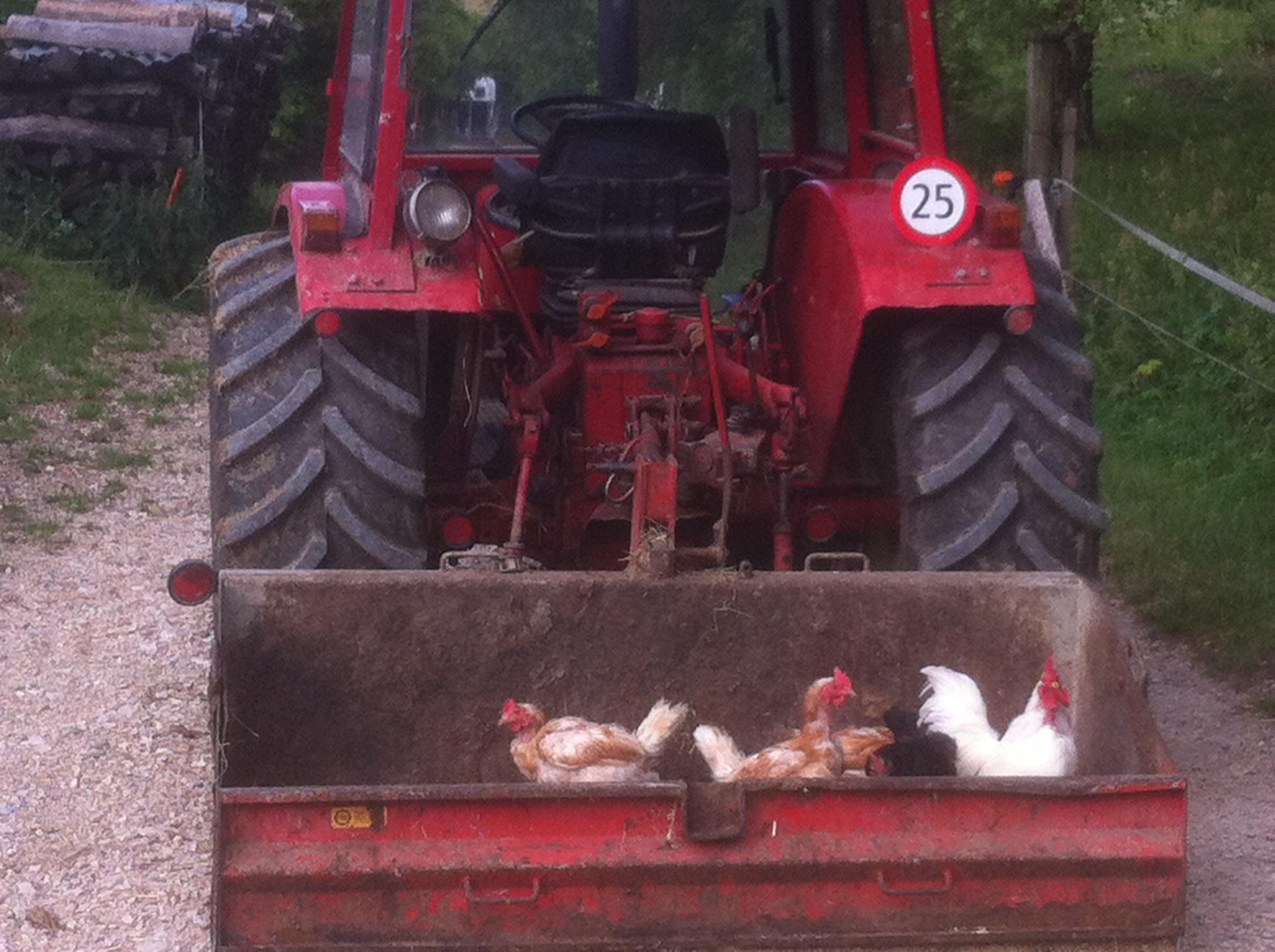 Hühner – Gwidem – Qualität mit Herz
